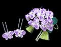 胡蝶蘭 かんざし